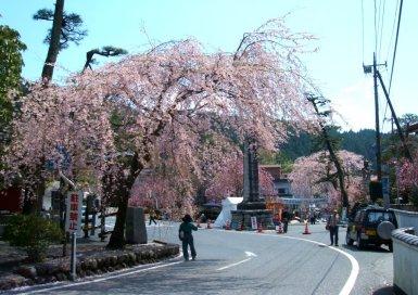 身延山 三門 桜