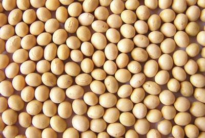 厳選した国産大豆